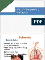 Anatomía de pulmón, pleura y diafragma