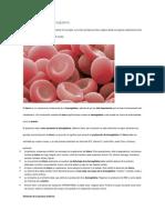 Como Aumentar La Hemoglobina