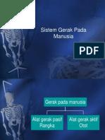 PPT rangka manusia