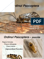 Ordinul Psocoptera 2