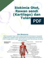 Biokimia Otot, Kartlago Dam Tulang