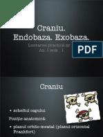 Lp9 Craniu. Endobaza