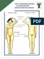 Los Cambios Del Cuerpo en La Pubertad