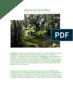 Ecosistema de laurisilva(1).docx