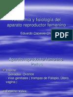 Anatomia y Fisiologia Del Aparato Rep
