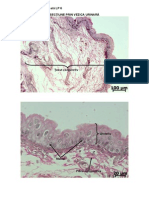 Histologie Si Embriologie Animala - Imagini LP 6