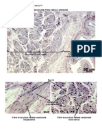 Histologie Si Embriologie Animala - Imagini LP 7