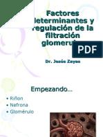 Factores determinantes y regulación de la filtración glomerular