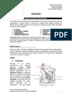 4.-Cabeza Ósea - Huesos de la Cara y Regiones Comunes