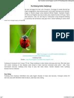 Kumbang Koksi (Ladybug) _ Riandinie