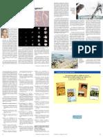 Adubar ou não com Nitrogênio - IAC-SP.pdf