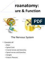 Neuroanatomy Structure AndFunction