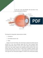 fisiologi-penglihatan