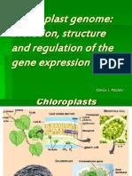 Chloroplasten genom12
