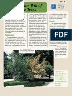 Verticillium Wilt of Shade Trees