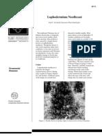 Lophodermium Needlecast