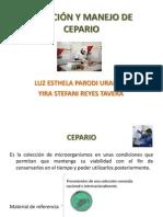CREACIÓN Y MANEJO DE CEPARIO
