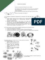 Ejercicios Ciclo Celular 10-11 (2)