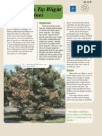 Sphaeropsis Tip Blight of Pines