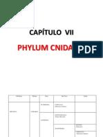 CAPÍTULO VII-PALEONTOLOGIA-GENERAL