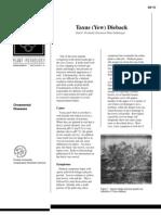 Taxus (Yew) Dieback