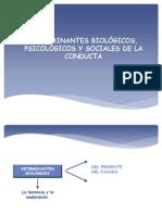 DETERMINANTES BIOLÓGICOS, PSICOLÓGICOS Y SOCIALES DE LA
