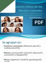 nervioscraneanos-111020215859-phpapp02.pptx