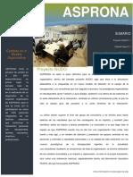 BOLETIN 1 ASPRONA.pdf