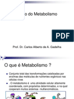 Aula_Visão do metabolismo