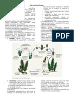 Revisional 2010 CPV UFJF Botanica