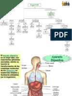 119115940-Aparato-Digestivo