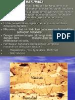Petrografi batubara