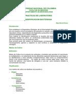 2. Identificacion Bacteriana i