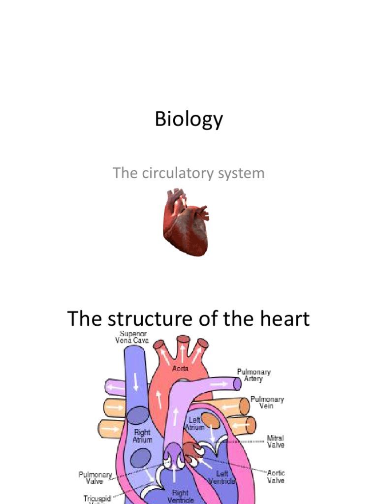 Biology IGCSE Human circulatory system | Heart ...