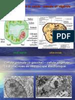 Biologie cellulaire Cours Français sous présentations