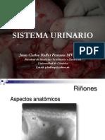 Insuficiencias e Infecciones Urinarias