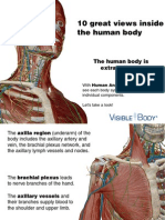 VB AnatomyAtlas Preview 112513