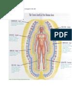 Aura umana si cele 7 nivele energetice.doc