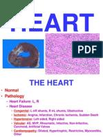 Ch12 Heart
