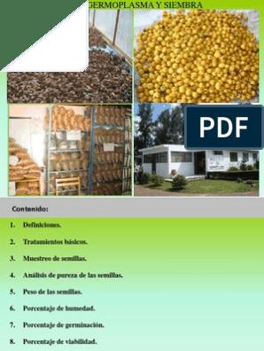 Como se toman las semillas de venadillo para bajar de peso