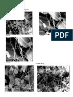 SEM Images of Sample D