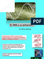 Clase 13. El DNA y Su Extraccion