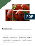 Presentacion Fresa