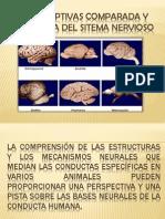Perspecptivas Comparada y Evolutiva Del Sitema Nervioso