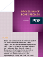 Processing of Bone Specimen