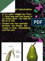 9039027 Anatomy and Physiology of Gallbladder