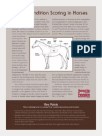 Body Condition Scoring in Horses