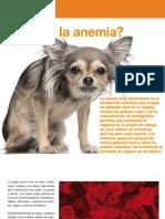 AV_22_Qué es la anemia