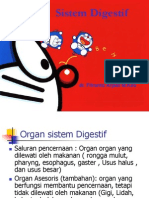 Slide anatomi digestif