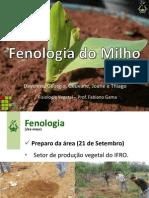 Seminário Fisiologia Vegetal - Milho